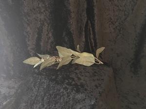 Eucalyptus-001 .50 single / 2.50 bunch